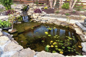 Take a look at this season's summer koi pond care edition.